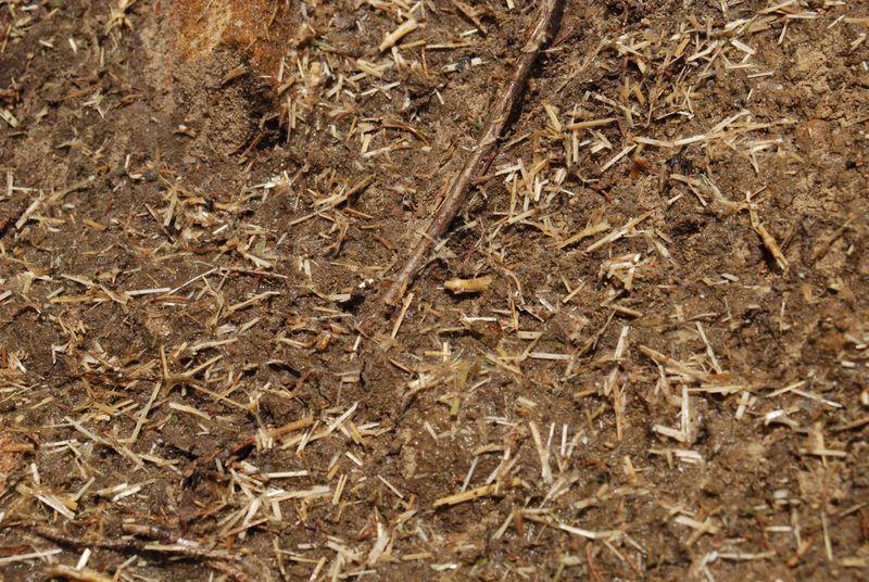 Vue de détail immédiatement après le semis hydraulique
