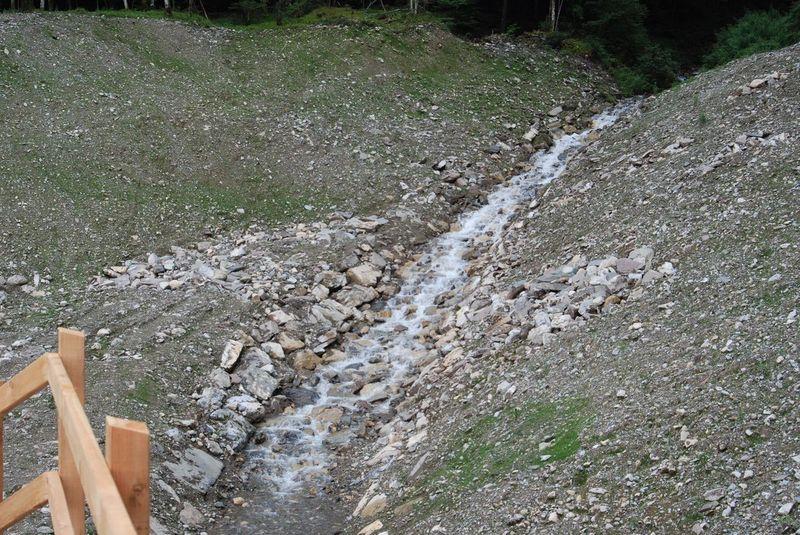 Début de la germination le long du canal