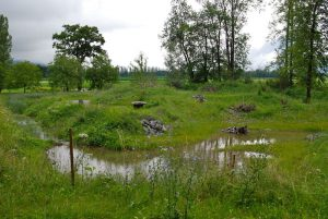 Le bassin de rétention est parfaitement intégré grâce au reverdissement d'Hydrosaat SA