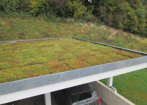 Nach dem Verlegen der vorkultivierten Sedummatte ist das Dach sofort grün