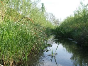 Renaturation d'un ruisseau