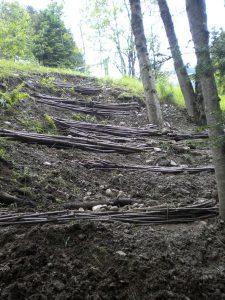 Revitalisaiton d'une forêt