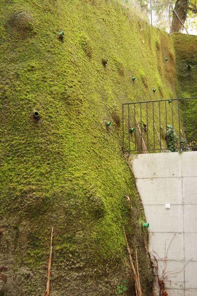 Le mur en béton est reverdi par la mousse