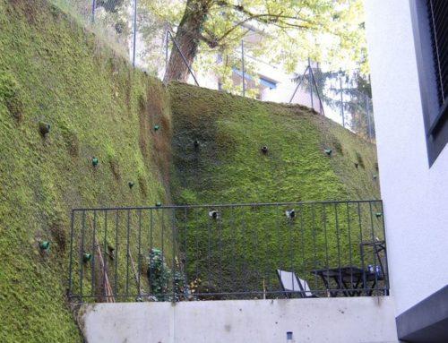 Moosbegrünung – Lausanne