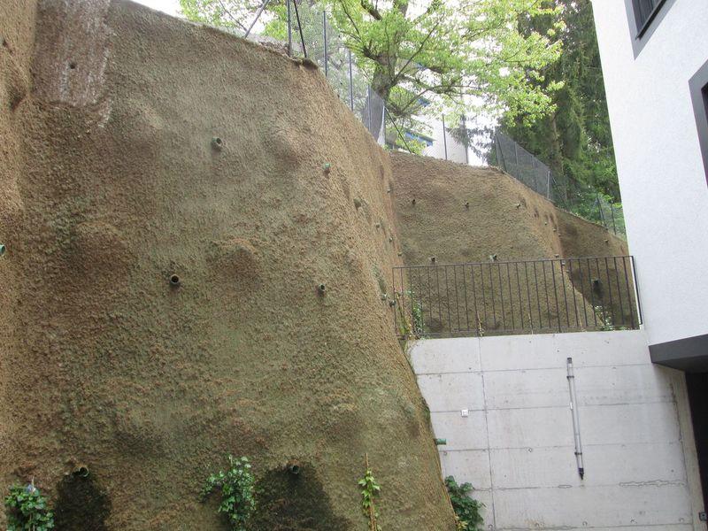 Vue d'ensemble du mur semé avec de la mousse